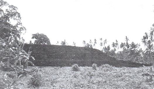 Figure 4: View of the eastern part of Talietumu platform, 90m long, 60m wide and reaching 5m high.